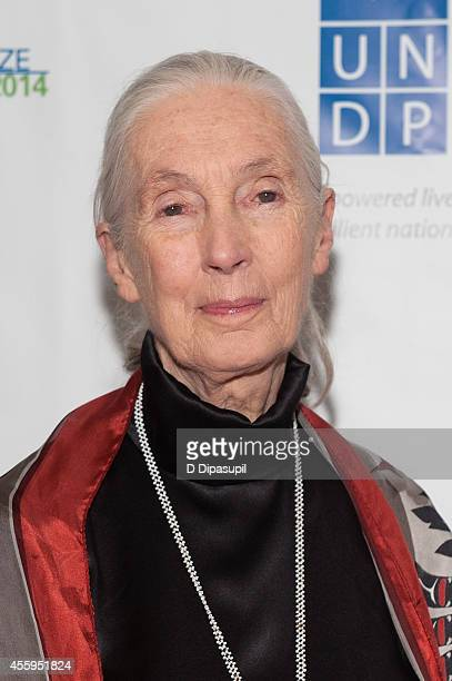 Jane Goodall attends the United Nations 2014 Equator Prize Gala at Avery Fisher Hall Lincoln Center on September 22 2014 in New York City