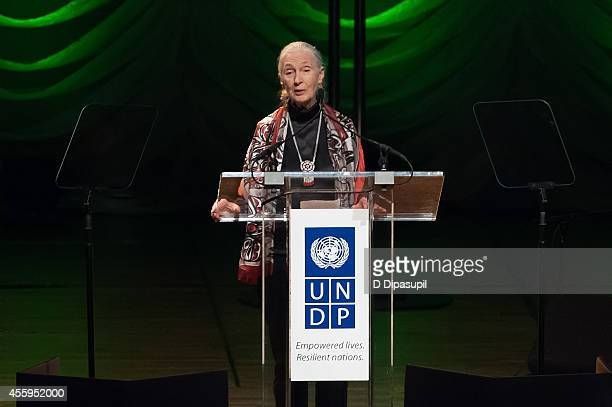 Jane Goodall speaks on stage during the United Nations 2014 Equator Prize Gala at Avery Fisher Hall Lincoln Center on September 22 2014 in New York...