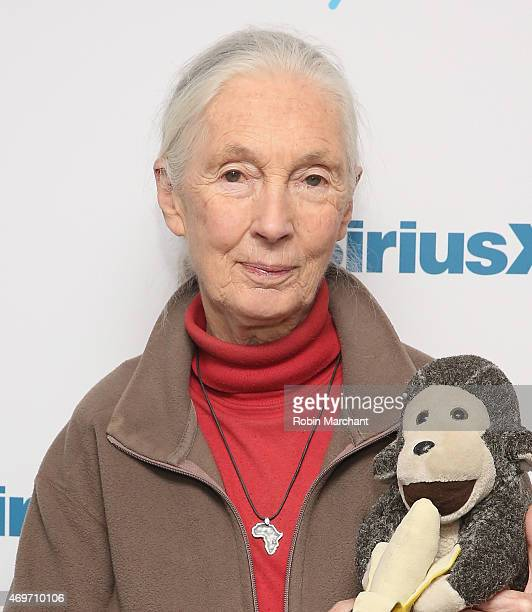 Jane Goodall visits at SiriusXM Studios on April 14 2015 in New York City