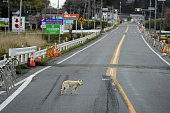 MINAMISOMA Japan A dog wearing a collar walks on an empty road in the town of Futaba Fukushima Prefecture on April 25 after the evacuation of...