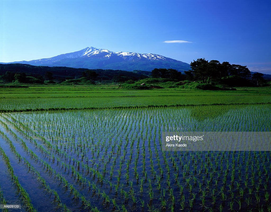 Japan, Akita Prefecture, Kisakata, flooded rice paddy fields