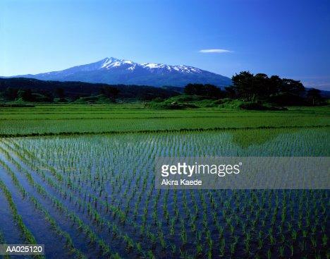 Japan, Akita Prefecture, Kisakata, flooded rice paddy fields
