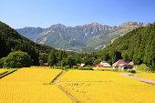 Japan Alps and rice field, Hakuba village, Nagano, Japan