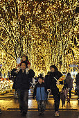 SENDAI Japan An annual illumination event starts Dec 2 in Sendai Miyagi Prefecture in northeastern Japan in which zelkova trees are lit up with LED...