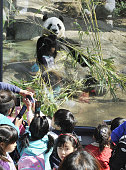 TOKYO Japan Children watch female giant panda Shin Shin who was shown to the public for the first time with her male counterpart Ri Ri after arriving...