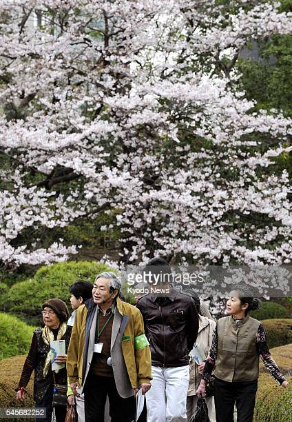 TOKYO Japan Evacuees from northeastern Japan visit the East Gardens of the Imperial Palace in Tokyo to view cherry blossoms escorted by a guide on...