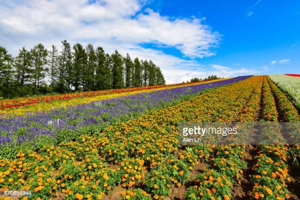 Japan Hokkaido Furano