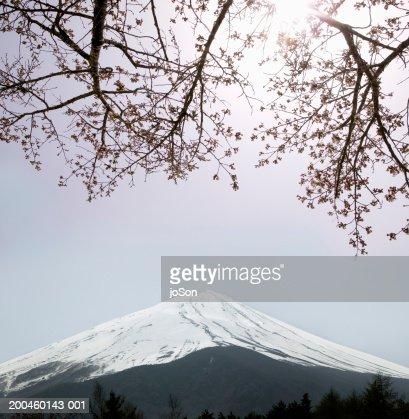 Japan, Honshu, Tokyo, Mount Fuji, cherry blossom in foreground,sunrise : Stock Photo