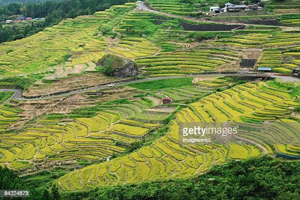 Japan, Mie Prefecture, Kumano Kodo, Terraced rice fields, high angle view