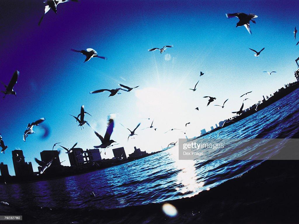 Japan, Minato-ku skyline, Seagulls flying : Stock Photo