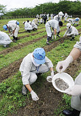 FUKUSHIMA Japan Officials of the water works department of Fukushima City sow sunflower seeds on July 20 2011 at a local plaza to lower the radiation...