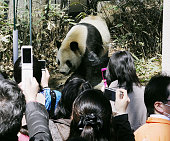 TOKYO Japan People take photos of male giant panda Ri Ri who was shown to the public for the first time with his female counterpart Shin Shin after...