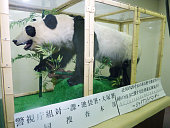 TOKYO Japan Photo taken on Dec 12 at a police station in Tokyo's Ikebukuro district shows a stuffed giant panda a protected animal which was seized...