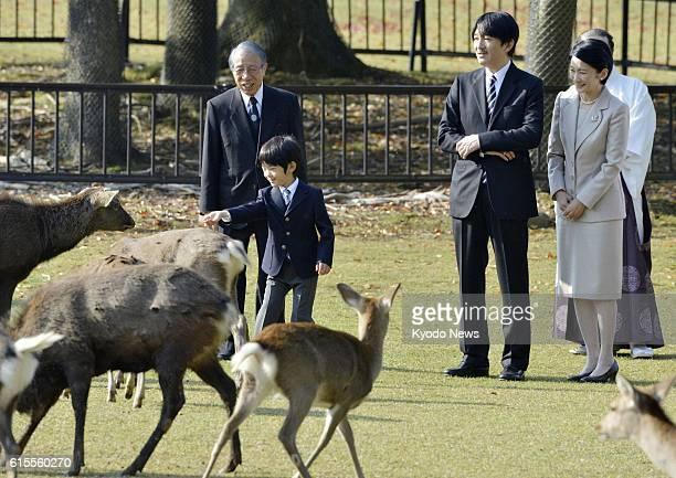 NARA Japan Prince Hisahito feeds deer at Nara Park in Nara City on Nov 8 watched by his parents Prince Akishino and Princess Kiko