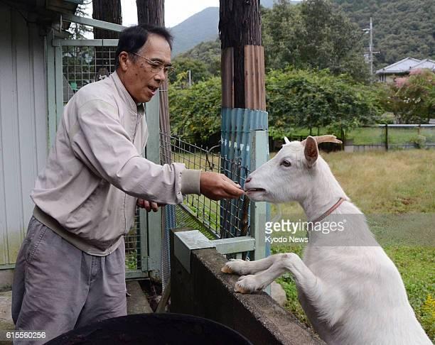 MATSUYAMA Japan Seiji Taniguchi operator of 'Sankyu Bokujo' for abandoned animals feeds a goat at the farm in Sanda Hyogo Prefecture on Oct 18 2012