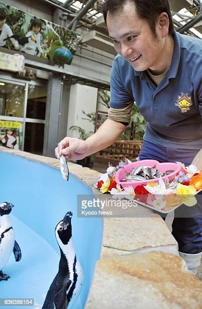MATSUE Japan Takeshi Notsu a zookeeper at Matsue Vogel Park feeds horse mackerel from a heartshaped bowl to 10yearold female penguin Sakura as a...