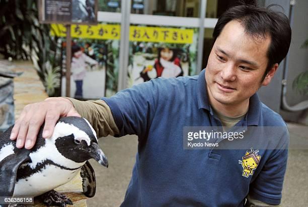 MATSUE Japan Takeshi Notsu a zookeeper at Matsue Vogel Park pats 10yearold female penguin Sakura on March 12 in Matsue Shimane Prefecture in western...