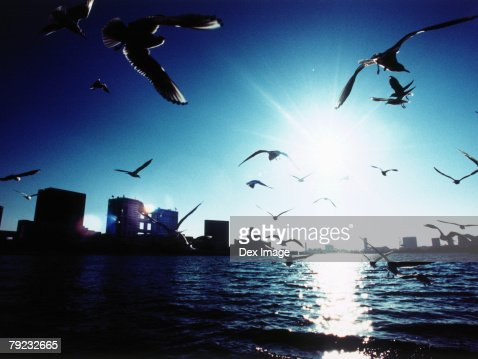 Japan, Tokyo Bay skyline, Seagulls flying : Stock Photo