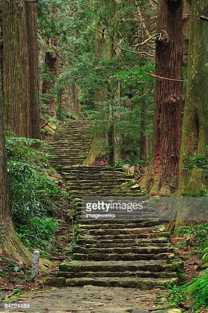Japan, Wakayama, Kumano Kodo, Daimonzaka Slope, Stepped walkway in forest