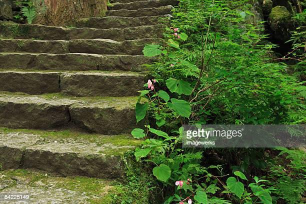 Japan, Wakayama, Kumano Kodo, Plants growing beside stone steps