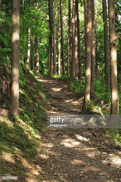Japan, Wakayama Prefecture, Kumano Kodo, Footpath passing through forest