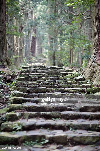 Japan, Wakayama, stone steps on path in forest