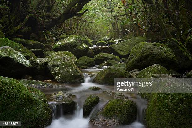 Japan, Waterfall in the rainforest of the Island Yakushima