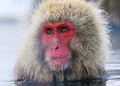 Japan Yudanaka Snow Monkey