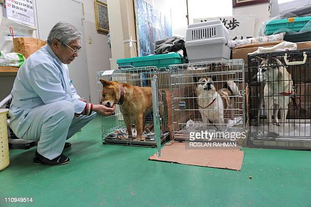JapandisastertsunamianimalsFOCUS by Giles HewittThis photo taken on March 24 2011 shows veterinarian Yuzou Taguchi head of Green Animal Hospital...