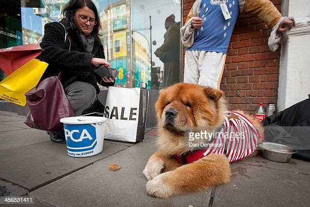 Japanese Akita dressed up in a festive costume helps to convince a Christmas shopper to donate money to the RSPCA on December 14 2013 in London...