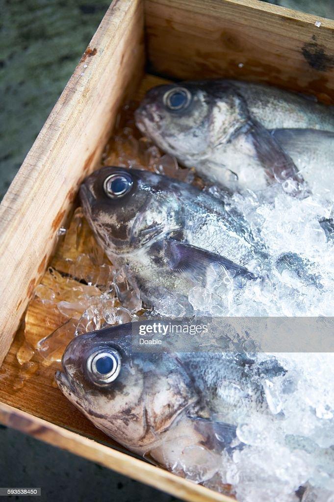 Japanese butterfish, Shizuoka Prefecture, Japan