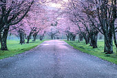 Spring ranch in Hokkaido