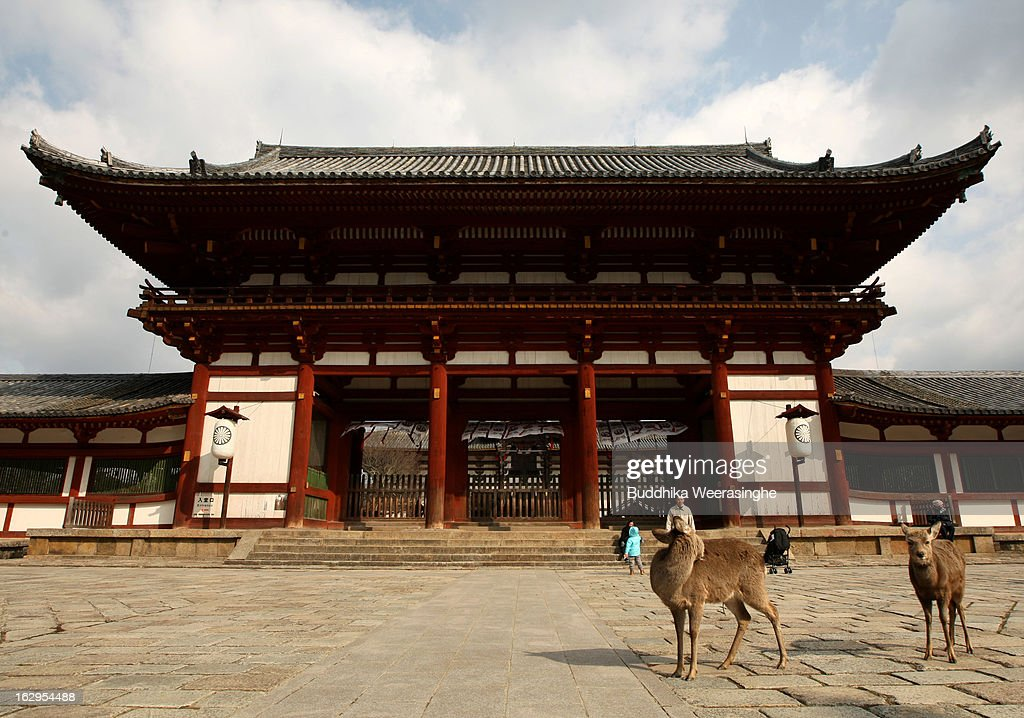 Japanese deer walk in front of the entrance to the Todaiji Temple on March 2, 2013 in Nara, Japan. The Japanese deer which roam freely in the grounds of the Todaiji Temple were believed to be messengers of the gods and have now been designated as a National Treasures. The Buddhist Todaiji Temple was built in 752 AD and is now one of seven sites in Nara to be listed as a UNESCO World Heritage Site.