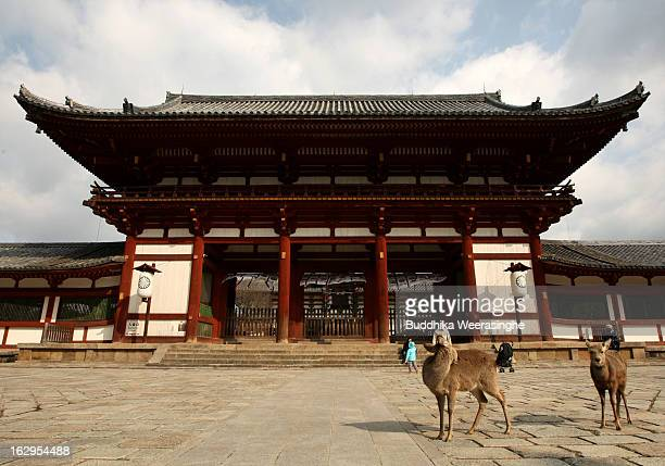 Japanese deer walk in front of the entrance to the Todaiji Temple on March 2 2013 in Nara Japan The Japanese deer which roam freely in the grounds of...