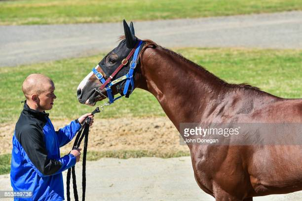 Japanese entrant for the Caulfield and Melbourne Cups Admire Deus acclimatises to his new home at Werribee Quarantine Centre on September 26 2017 in...