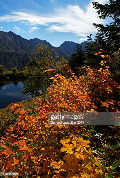 Japanese fall colors on alpine pond