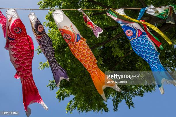 Japanese families with boys hang colorful carp kites called Koinobori outside their houses one for each boy with the biggest representing the oldest...