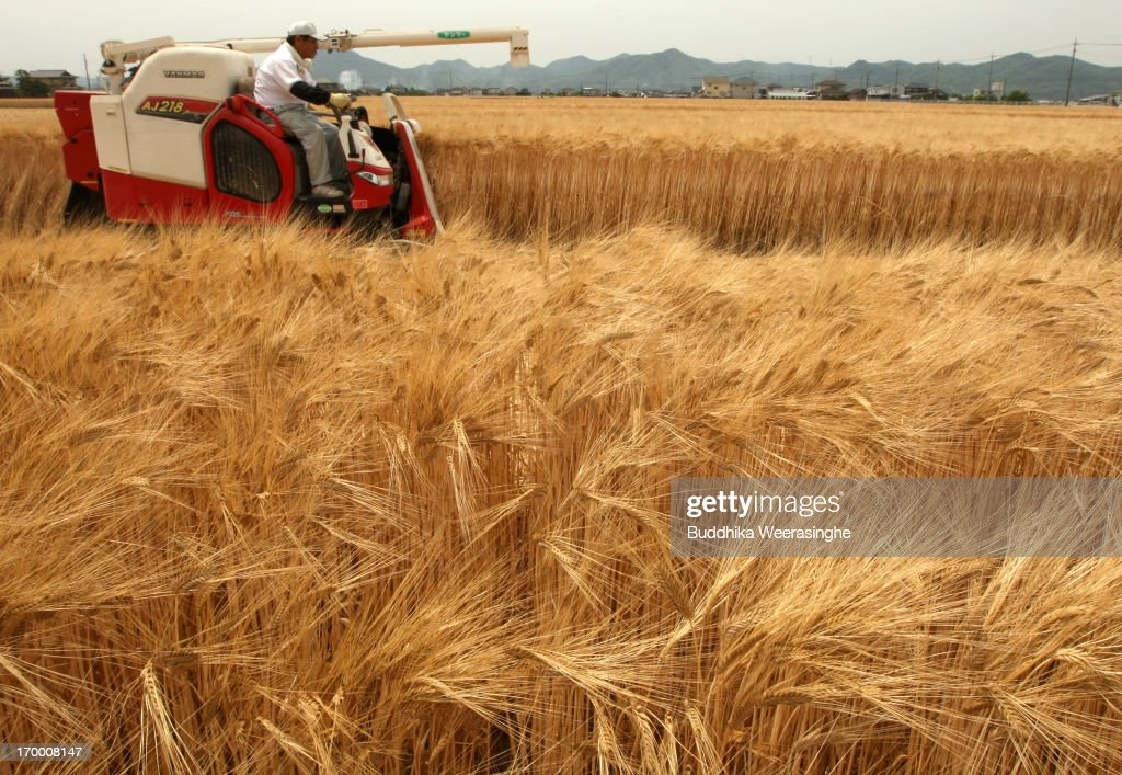 A Japanese farmer harvests wheat with a combine harvester in a field at the start of wheat harvesting season on June 6, 2013 in Okayama, Japan. Japan is the world's sixth-biggest wheat buyer and imports around 800,000 tonnes each year, 60 percent of which is from the US.