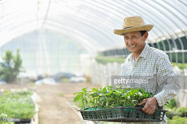 Japanese farmer Working in a field