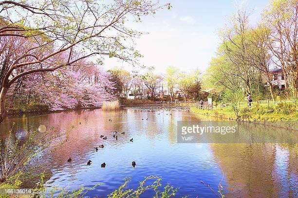 Japanese garden in Spring.