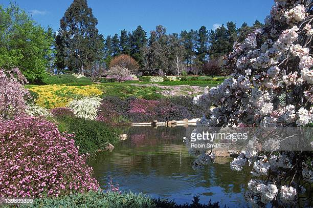 Japanese gardens, Cowra township, NSW