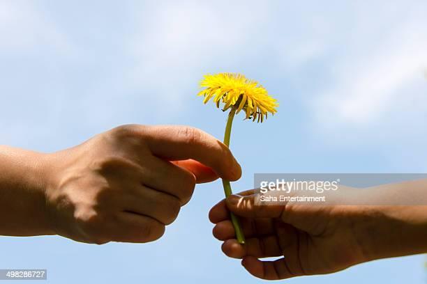 Japanese girl pass the dandelion for her mother