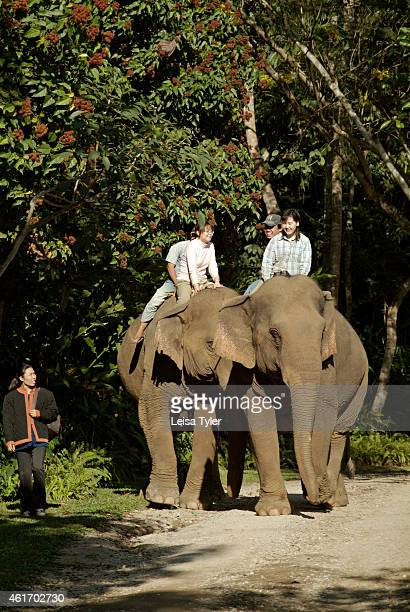 Japanese guest staying at the Anantara Golden Triangle Resort and Spa training to be a mahout Money raised through the property's threeday course...
