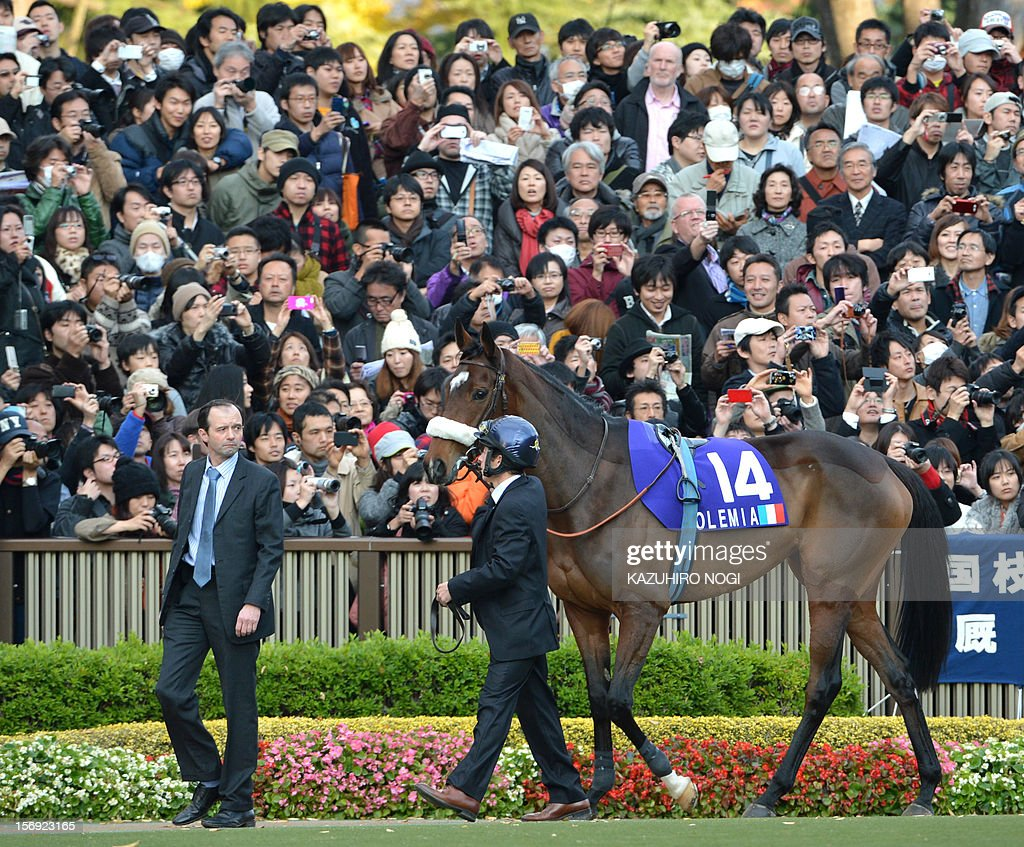 Japanese horse race fans look at Slemia (#14), the winner of the Prix de l'Arc de Triomphe, in the paddock before the 2,400-metre (1.5 mile) Japan Cup horse race at the Tokyo Race Course on November 25, 2012. Gentildonna edged past Prix de l'Arc de Triomphe runner-up Orfevre by a nose to become the first three-year-old filly to win the Japan Cup horse racing. AFP PHOTO / KAZUHIRO NOGI
