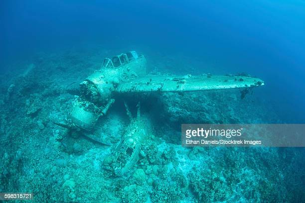 A Japanese Jake seaplane on the seafloor of Palaus lagoon.