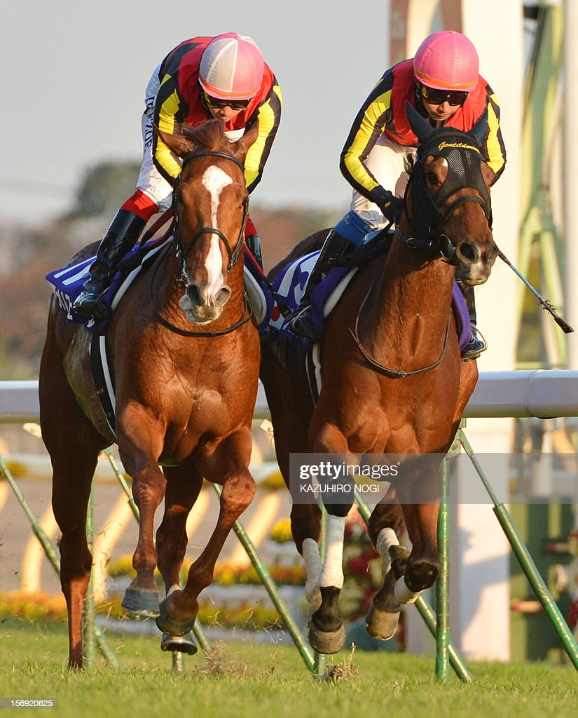 Japanese jockey Yasunari Iwata on Gentildonna (R) races against with Orfevre (L) ridden by Kenichi Ikezoe to win the 2,400-metre (1.5 mile) Japan Cup horse race at the Tokyo Race Course on November 25, 2012. Gentildonna edged past Prix de l'Arc de Triomphe runner-up Orfevre by a nose to become the first three-year-old filly to win the Japan Cup horse racing.
