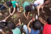 Japanische Kinder ernten süße Kartoffeln