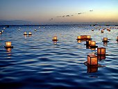 Japanese lanterns floating on ocean