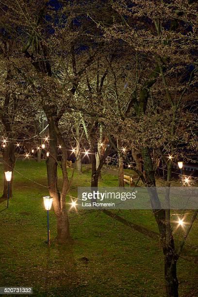 Japanese lanterns lit at night in park