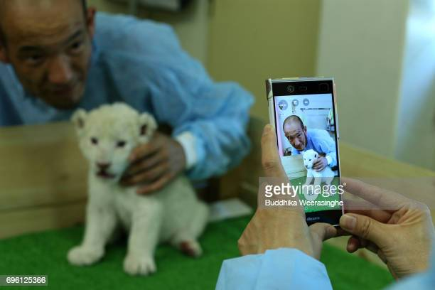 Japanese lion fan plays with newly born twin white lion cub as poses a picture during the fifth day of Lion Cub Premium Tour program at an animal...
